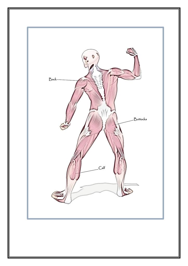 cuerpo2
